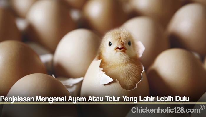 Penjelasan Mengenai Ayam Atau Telur Yang Lahir Lebih Dulu