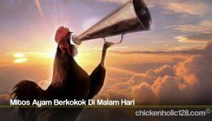 Mitos Ayam Berkokok Di Malam Hari