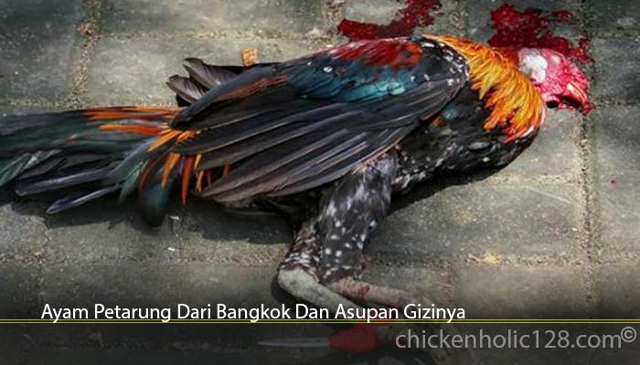 Ayam Petarung Dari Bangkok Dan Asupan Gizinya