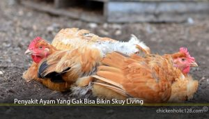 Penyakit Ayam Yang Gak Bisa Bikin Skuy Living