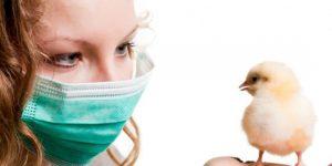 terinfeksi-penyakit-flu-burung